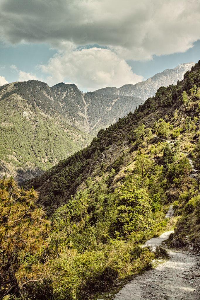 Trekking trail from Naddi to Guna Devi temple (near Mcleodganj, Himachal Pradesh)